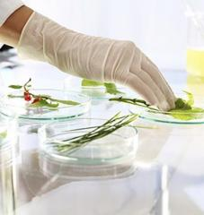 Principes actifs des plantes